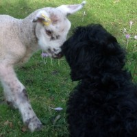 Watson sharing kisses with Turbo the farm dog